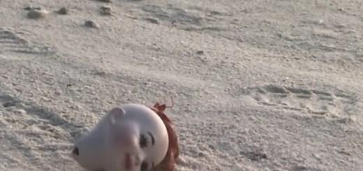Creepy Doll Head Gets Dragged By Hermit Crab Along Beach