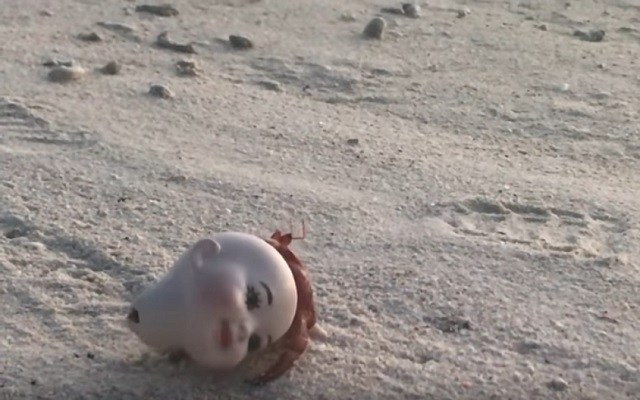 Creepy Doll Head Gets Dragged By Hermit Crab Along Beach