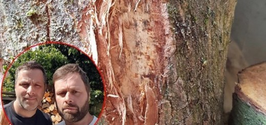 Two Brothers Discover Face Of Jesus On Torn Tree Trunk