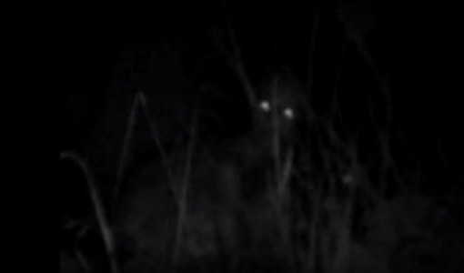 Alien-In-Oregon-woods-video