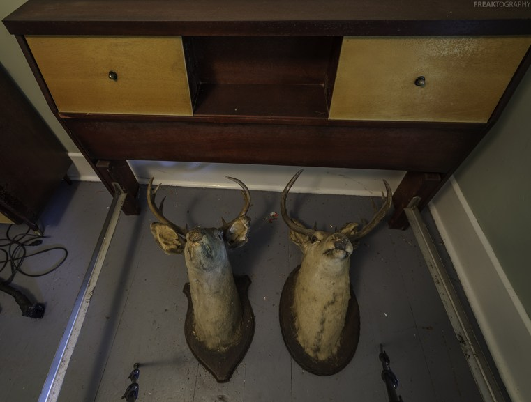 Two deer heads found in the bedroom of an abandoned house.