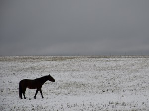 Black Horse Winter 8x10 Print