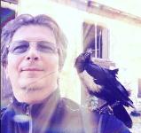 Munin, le corbeau
