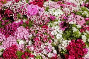 Flowers that Looks Taste Good