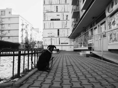 Snapseed(8)