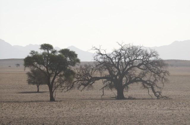 Leven en dood in Namibië