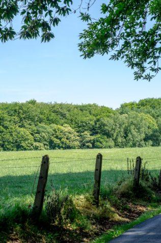 Field Muziekbos, Ronse - Vlaamse Ardennen