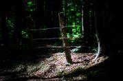 Muziekbos, Ronse - Vlaamse Ardennen