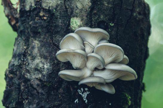 5. Mushrooms