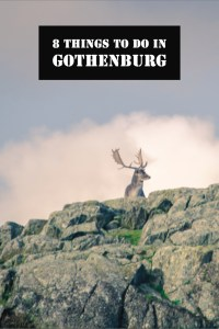 8 things to do in Gothenburg pin