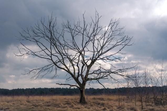 Dead tree in the Kalmthoutse heide