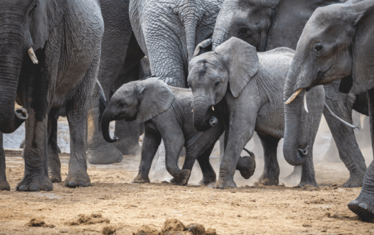 The best Instagram hashtags for your visit to Botswana