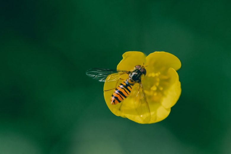 More Macro photography this month