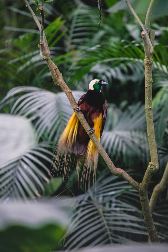 tropical bird in Pairi Daiza