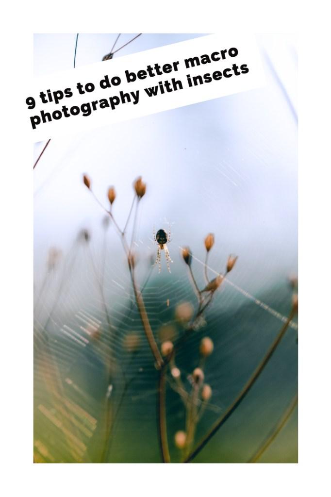 macro photography tips