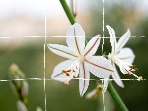 flowers rule of thirds