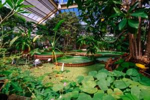 greenhouse hortus botanicus