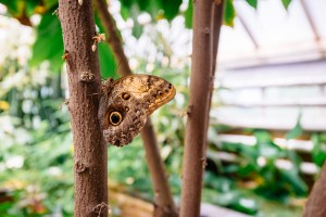 butterfly in hortus botanicus