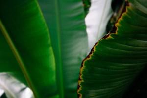 palm leafs close up