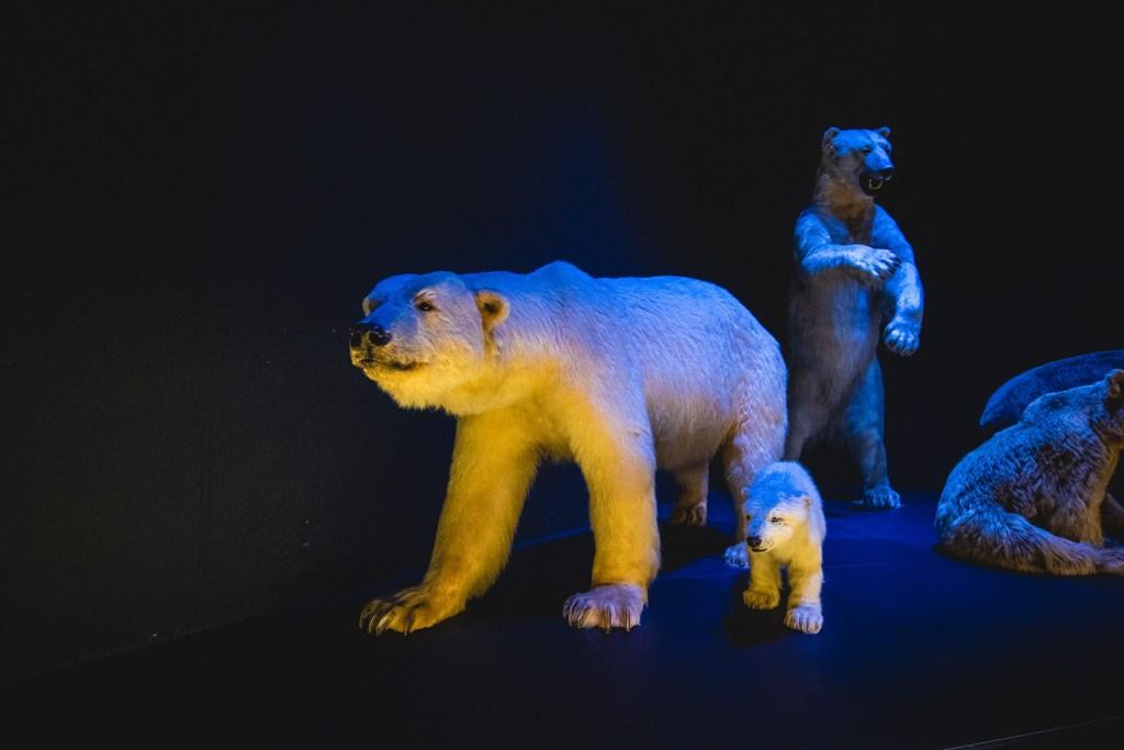 polar bears in naturalis