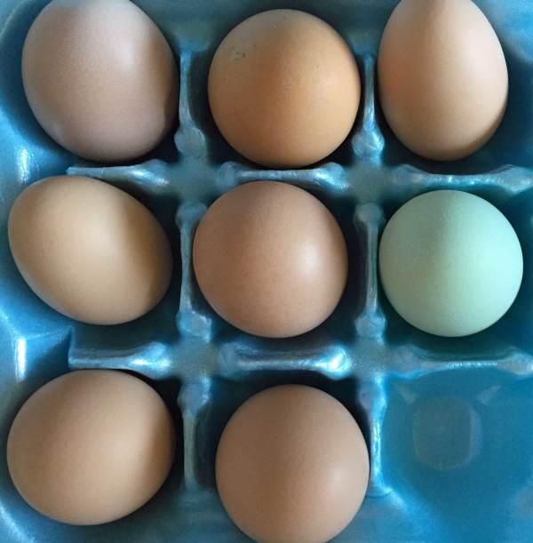 Green-Egg