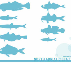 Vector Adriatic Sea Fish Silhouettes