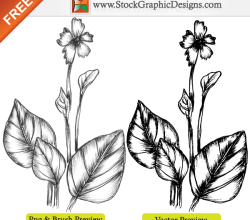 Hand Drawn Sketchy Plant Free Vector Image