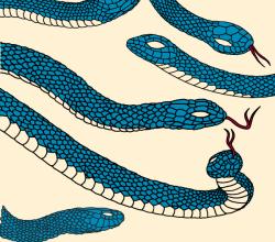 Vector Snake Illustrator Pack