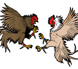 Cockfighting Vector Art