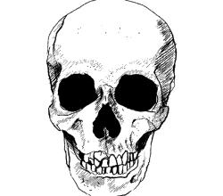 Vector Skull Image