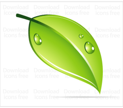 Green Leaf with Water Drops Vector Image