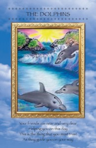 dolphins_low