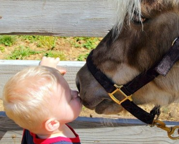 Baby Kissing A Horse