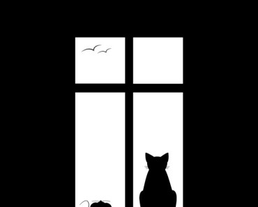 Black and White Cat and Mouse