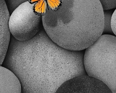 Butterfly and Cobblestone