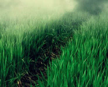 Green Wheat On Farmland