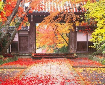 Maple Leaves and Chinese Style Ancient Architecture