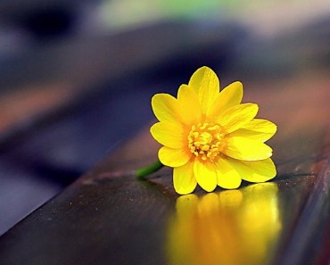 Small Yellow Wildflowers On the Bench
