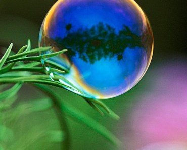 Soap Bubble and Green Leaf