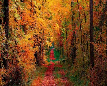 Autumn Woods and Road