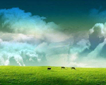 Green Cow Pasture