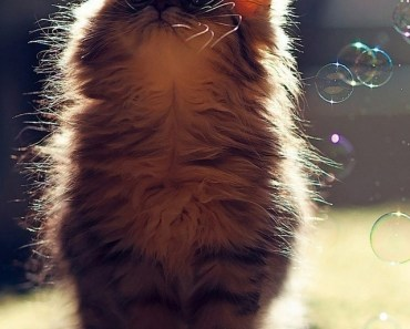 Kitten and Soap Bubbles