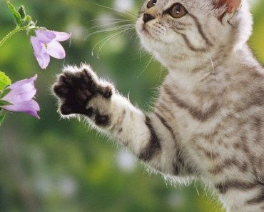 Cat Playing with Flowers