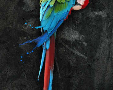 Colorful Painting Parrot