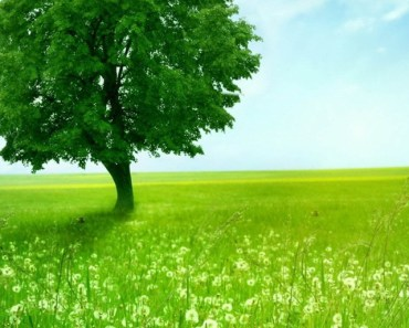 Green Tree and Dandelions