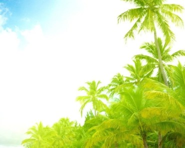 Palm Trees At the Seaside