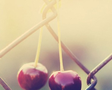 Cherries Hanging On The Fence