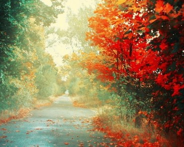 Falling Red Maple Leaves