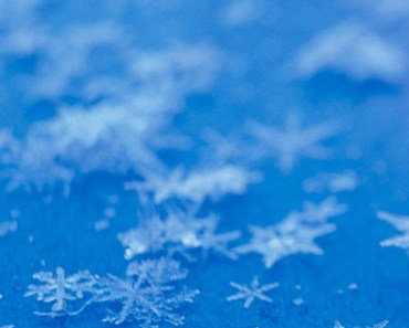 Snowflakes On The Blue Ground