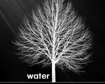 Water Under The Tree